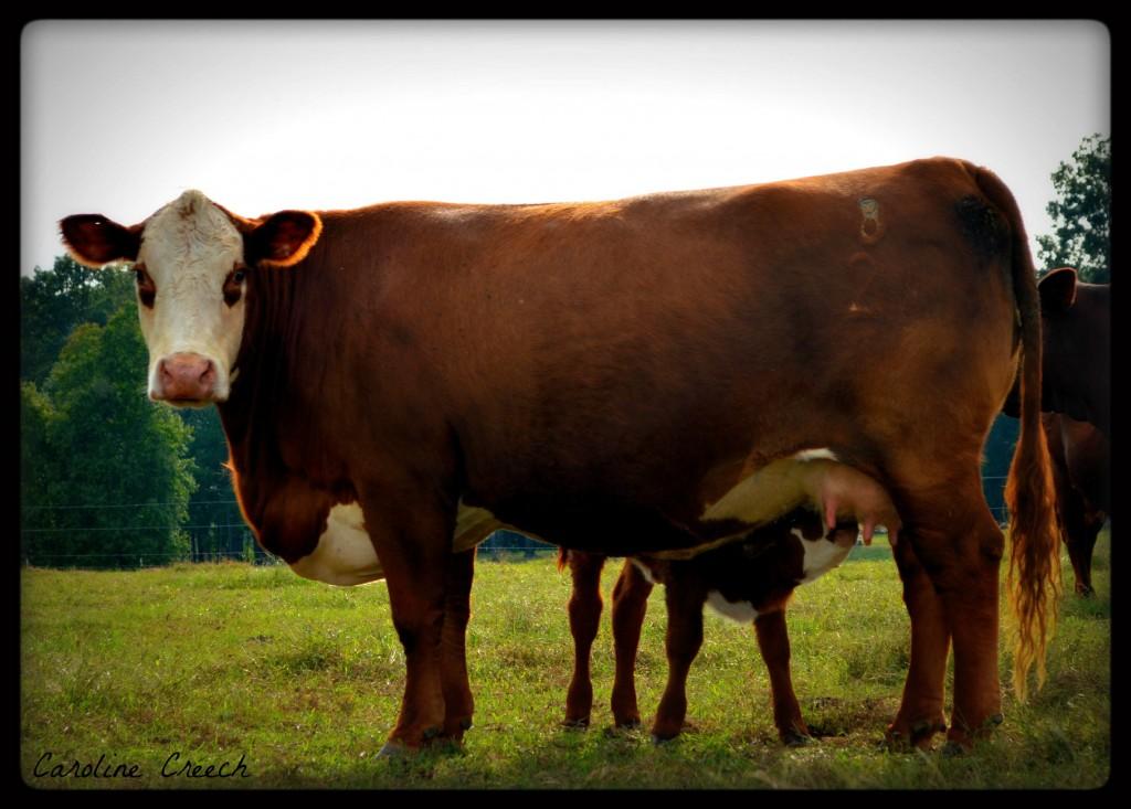 Creech Farm Santa Gertrudis 87