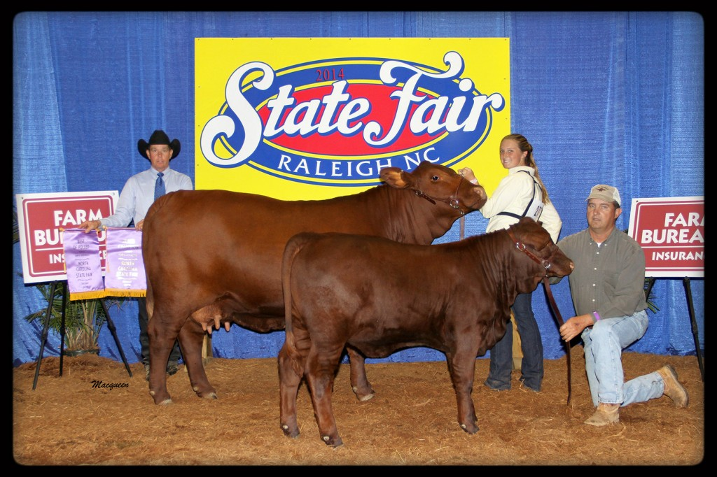 "Gray Oaks 220 ""Tally"" Grand Champion at North Carolina 2014 Open Show."