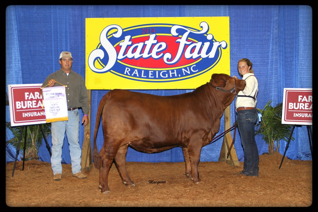 "Flatwillow 266 ""Loretta"" Reserve Grand Champion Heifer at North Carolina 2014 Open Show."