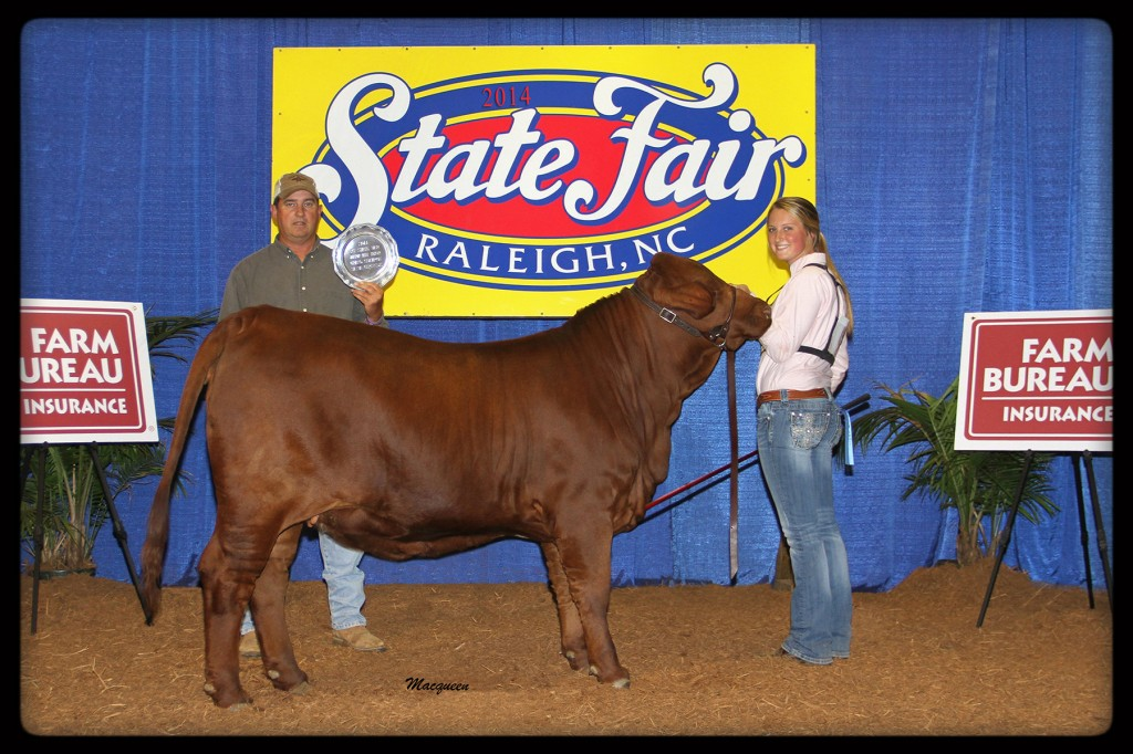 "Flatwillow 266 ""Loretta"" Grand Champion Heifer at North Carolina 2014 State Fair Junior Show."